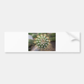 Cactus Top Bumper Sticker