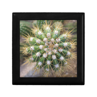 Cactus Top Gift Box