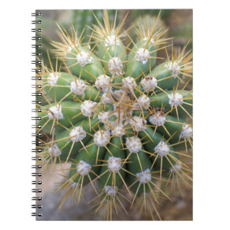 Cactus Top Notebook