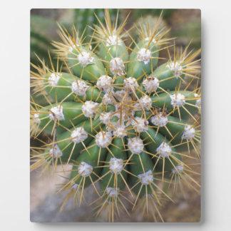 Cactus Top Plaque