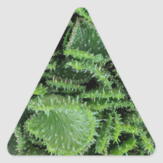 Cactus Triangle Sticker