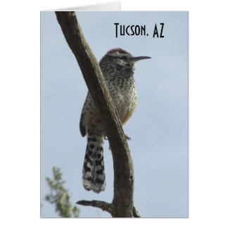 Cactus Wren Tucson Arizona Card