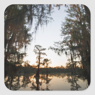 Caddo Lake at sunrise Square Sticker