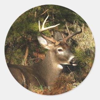 "Cade""s Cove Buck Classic Round Sticker"