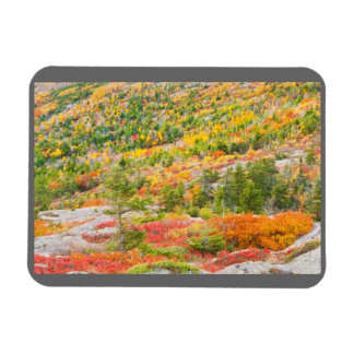 Cadillac Mountain in Fall, Acadia National Park Magnet