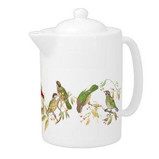 Cafbird Birds Wildlife Animals Botanical