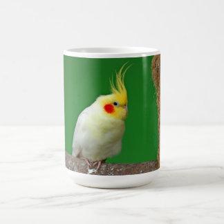 Café de photo d'oiseau de Cockatiel beau, tasse de