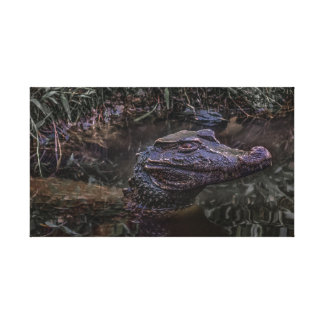 Caiman at Water with Menacing Look Canvas Print