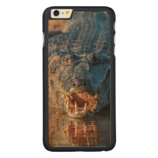 Caiman shows its teeth, Brazil Carved Maple iPhone 6 Plus Case
