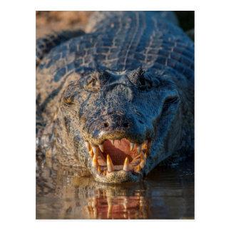 Caiman shows its teeth, Brazil Postcard