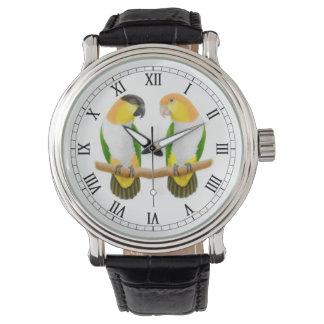 Caique Parrot Love Watch
