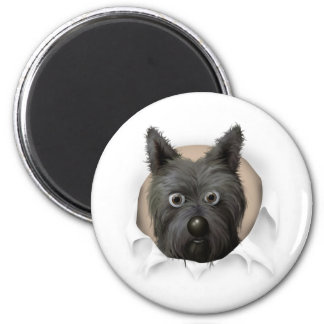 Cairn Terrier 2 Busting Out Magnet
