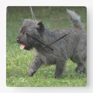 cairn-terrier-2.jpg square wall clock