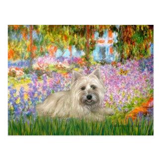 Cairn Terrier 4 - Garden Postcard