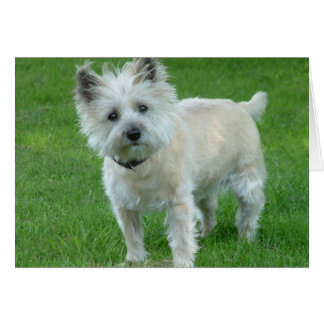 Cairn Terrier Card