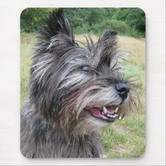Cairn Terrier dog mousepad, gift idea Mouse Pad