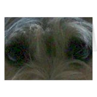 cairn terrier eyes card