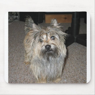 cairn terrier full mouse pad