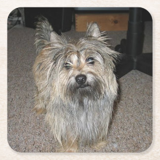 cairn terrier full square paper coaster