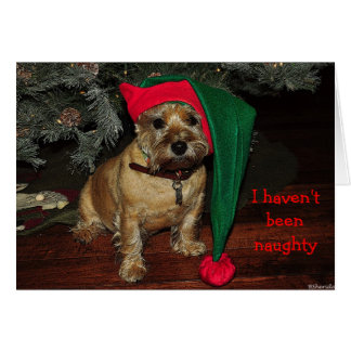 Cairn Terrier Holiday Card