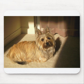 Cairn terrier laying mouse pad