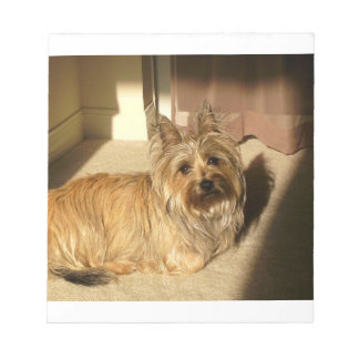 Cairn terrier laying notepad