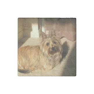 Cairn terrier laying stone magnets
