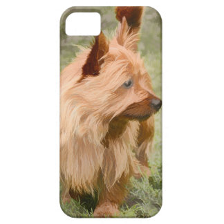 Cairn Terrier - Painting iPhone 5 Cover