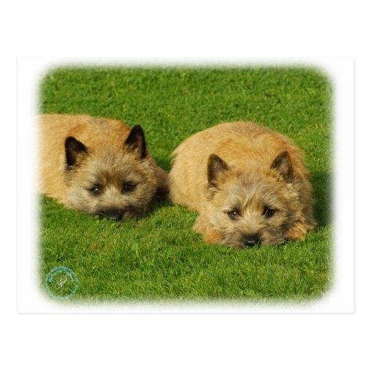 Cairn Terrier puppies 9W048D-007 Postcard