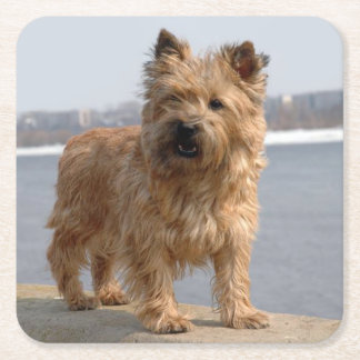 Cairn Terrier Puppy Dog Love Square Paper Coaster