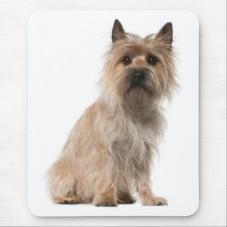 Cairn Terrier Puppy Dog Mousepad