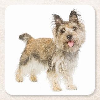 Cairn Terrier Tan Cream Black Puppy Dog Love Square Paper Coaster