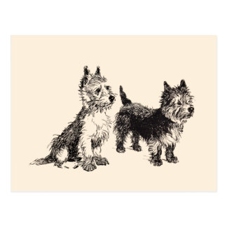 Cairn Terriers Vintage Pen & Ink Postcard