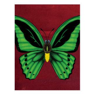 Cairns Birdwing Butterfly Postcard