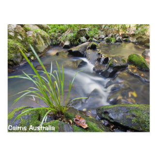 Cairns Forest Australia Post Card