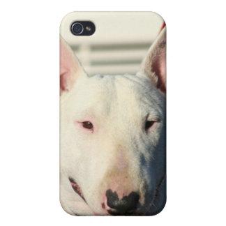 Caisse anglaise de point de bull-terrier étuis iPhone 4