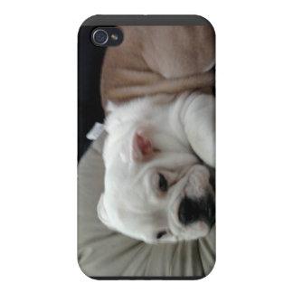 Caisse de point de chien de Taureau Étuis iPhone 4