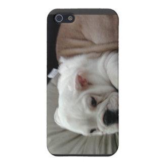Caisse de point de chien de Taureau iPhone 5 Case