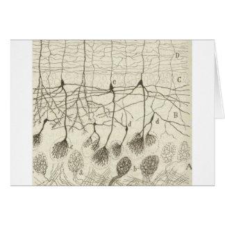 Cajal's Neurons 8 Card