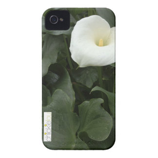 Cala Lilly Phone iPhone 4 Case