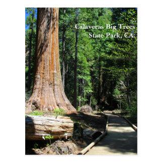 Calaveras Big Trees State Park, CA. Postcard