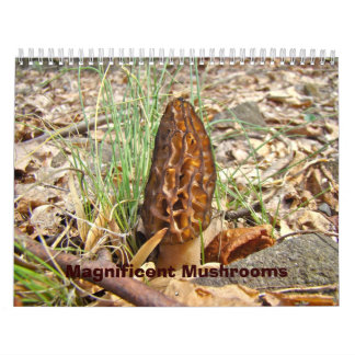Calendar - Magnificent Mushrooms