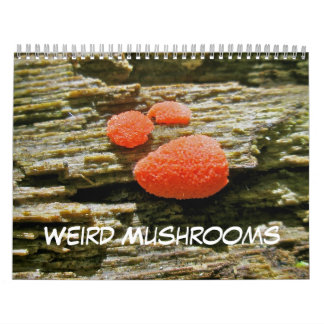 Calendar Weird Mushrooms
