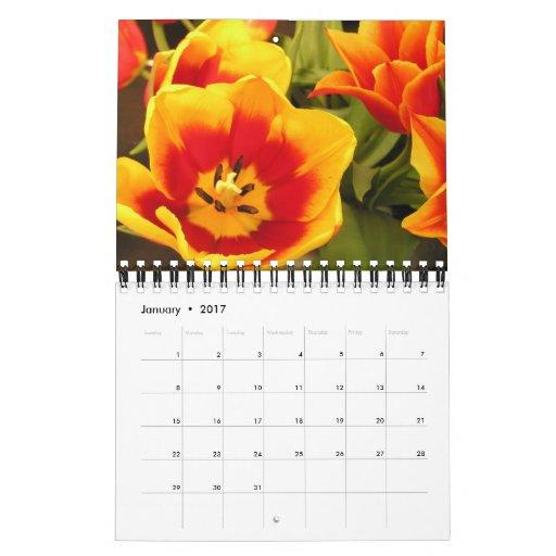 Calendrier irlandais de festival de tulipe