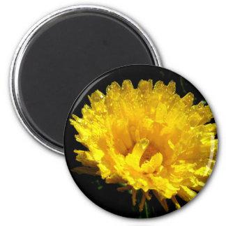 Calendula aka Pot Marigold 2 Inch Round Magnet