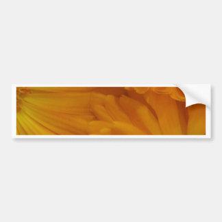 Calendula Bumper Sticker