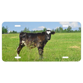 Calf at green fields license plate