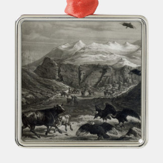 Calf being attacked by the Condors Silver-Colored Square Ornament