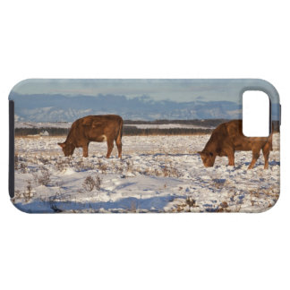 calgary, alberta, canada 2 case for the iPhone 5