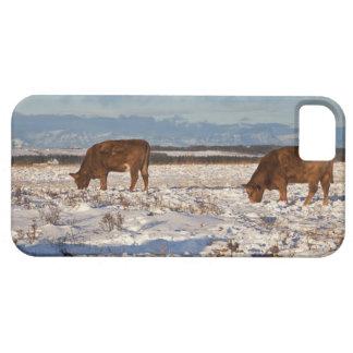 calgary, alberta, canada 2 iPhone 5 covers